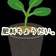 ハイドロカルチャー 肥料