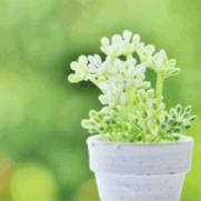 ハイドロカルチャー 植物 選び方